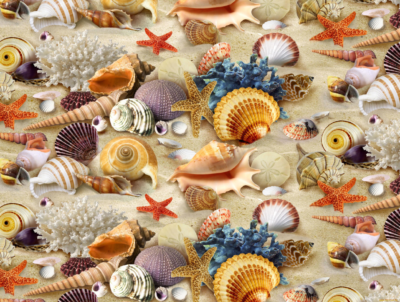 красивые картинки про море и ракушки печать фартуке